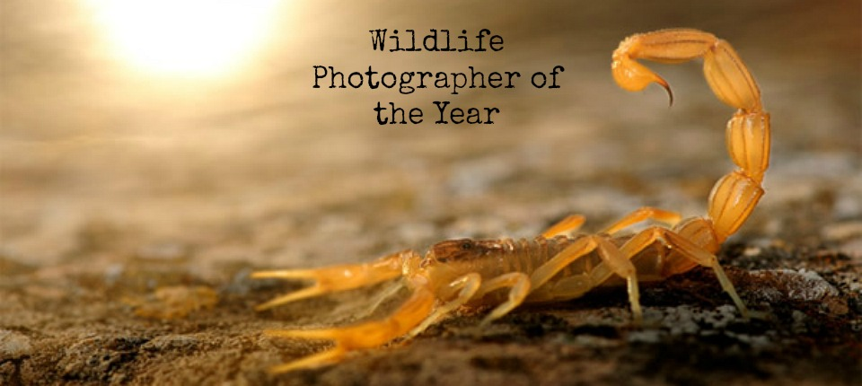 Wildlife Photographer of the Year 2015: naturaleza a lo bestia en el COAM