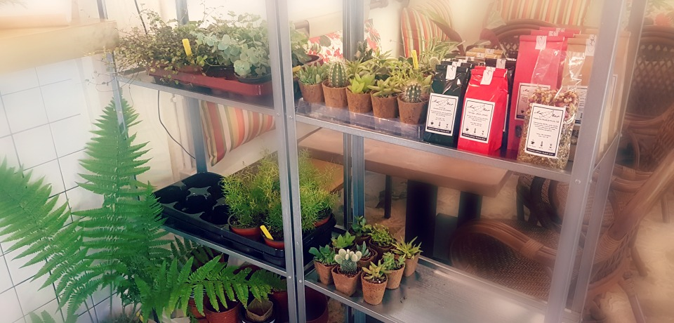 tes y plantas para llevar en Mandioca Madrid